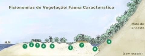Fisionomia de Vegetação / Fauna Característica